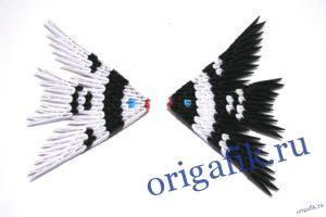 Скалярия оригами