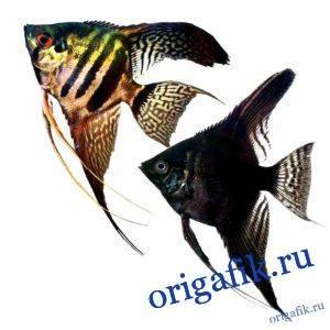 Рыбка скалярия из бумаги